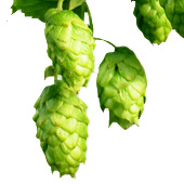 DrinkingBeer - Hop-tastic